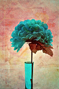 "\""still Life Photography\\\"" Prints - Estillo - s04b2t22 Print by Variance Collections"