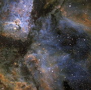 Starfield Posters - Eta Carinae Nebula Poster by Don Goldman