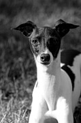 Help Support Animal Rescue - Ethan - Black and White by Angela Rath