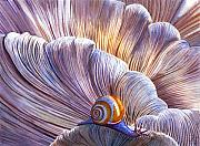 Snail Paintings - Ethereal by Catherine G McElroy