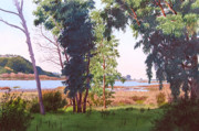 Lagoon Painting Prints - Eucalyptus Trees at Batiquitos Lagoon Print by Mary Helmreich