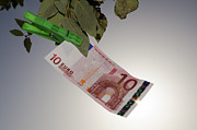 Money Prints - Euro hanging in a tree Print by Mats Silvan