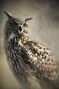 Animal Prints - European Eagle Owl Print by Ethiriel  Photography