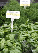 Belgium Photos - European Markets - Basil and Dill by Carol Groenen
