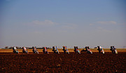 Cadillac Ranch Photos - Evening at the Cadillac Ranch on Route-66 TX by Susanne Van Hulst