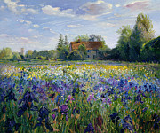 Country Cottage Metal Prints - Evening at the Iris Field Metal Print by Timothy Easton