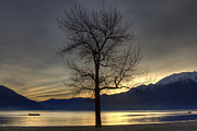 Branches Art - evening at the Lake Maggiore by Joana Kruse