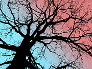 Amy Sorrell - Evening Breaks