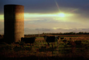 Joel Witmeyer - Evening Cows