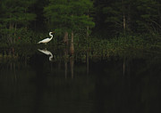 Bird Giclee Prints - Evening Egret Print by Suzanne Gaff