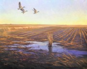 Geese Paintings - Evening Flight by Calvin Carter