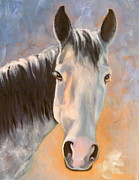 Gray Horse Prints - Evening Glow Print by Susan A Becker