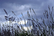 Grey Clouds Photo Posters - Evening grass Poster by Elena Elisseeva