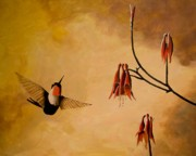 Hummingbird Paintings - Evening Light - Ruby Throated Hummingbird by Norman Wright