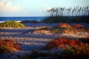 Botanical Beach Photos - Evening Light at the Beach by Susanne Van Hulst