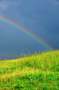 Summer Storm Prints - Evening Rainbow over Pasture Field Print by Thomas R Fletcher