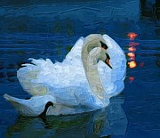 Swans Art - Evening Swans by Amanda Moore