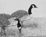 Geese Drawings Metal Prints - Evening Walk Metal Print by AniK