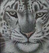 Snow Pastels - Ever Watchful 2 by Dawn Jones