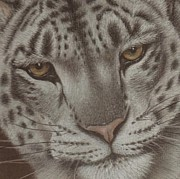 Snow Pastels - Ever Watchful by Dawn Jones
