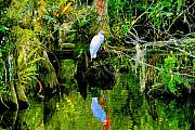 Everglades Metal Prints - Everglades Egret Metal Print by David Lee Thompson