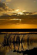 Everglades National Park Posters - Everglades Evening Poster by David Lee Thompson