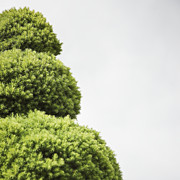 Sculpted Tree Photos - Evergreen Topiary by Jetta Productions, Inc