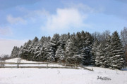 Split Rail Fence Prints - Evergreen Winter Print by Anthony R Socci