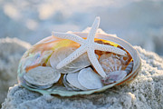 Seashells Metal Prints - Every Grain of Sand Metal Print by Melanie Moraga