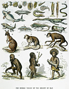 1876 Prints - Evolution Chart Print by Granger