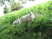 Neil Thomasson - Ewe and Me Mum