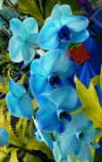 Exotic Blue Orchids Print by Jeanette Oberholtzer