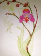 Pink Flower Branch Paintings - Exotic Dancer by Beverley Harper Tinsley