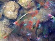 Exotic Fish Prints - Exotic Fish Print by Rose  Hill