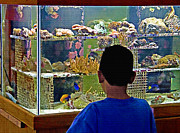 Tropical Fish Mixed Media Posters - Exotic Tropical Fish - Boy at the Aquarium Poster by Steve Ohlsen