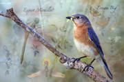Eastern Bluebird Prints - Expect Miracles Print by Bonnie Barry