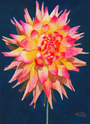 Watercolour Posters - Exploding Lollipop Dahlia Poster by Ken Powers