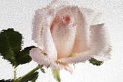Exploding Pink Rose Print by M K  Miller