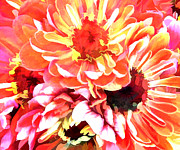 Perennials Painting Posters - Explosion of Bright Zinnias Poster by Elaine Plesser