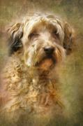 Puppy Digital Art Metal Prints - Expression Metal Print by Trudi Simmonds