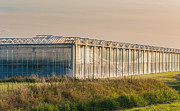 Glass Reflecting Framed Prints - Exterior of a modern greenhouse Framed Print by Ruud Morijn