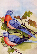 Pigeon Paintings - Extinct Birds The Passenger Pigeon by Debbie McIntyre