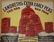 Red Bag Posters - Extra Early Peas Poster by David Bearden