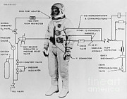 White Suit Framed Prints - Extravehicular Space Suit, 1965 Framed Print by NASA/Science Source