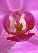Orchids - Extremely Loud And Incredibly Close by Juergen Roth