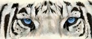 Featured Art - Eye-Catching Royal White Bengal by Barbara Keith