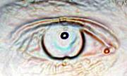 Trippy Digital Art - Eye Dot by Joshua Sunday