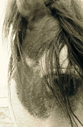 Wild Horse Pyrography Prints - Eye Of A Mustang Print by Tess  Marie