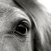 Looking At Camera Art - Eye Of Horse by Gabriella Nonino