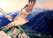 Falcon Drawings Metal Prints - Eye of the Gyr Metal Print by Nils Beasley